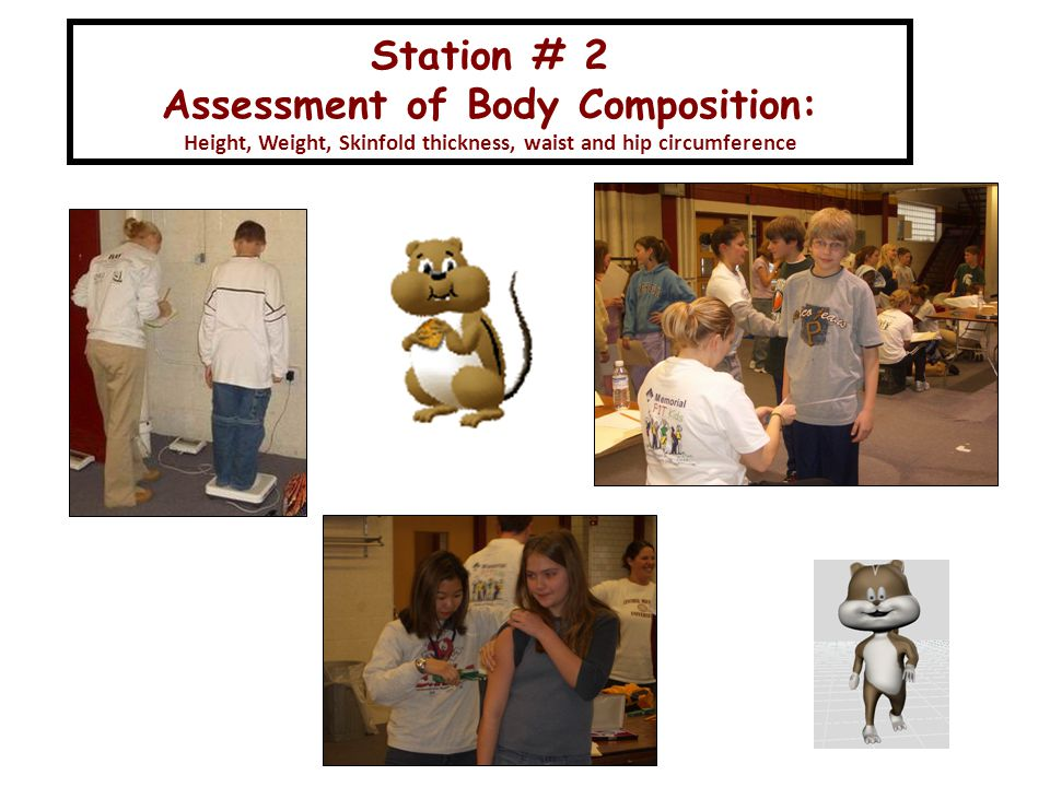 Station # 2 Assessment of Body Composition: Height, Weight, Skinfold thickness, waist and hip circumference