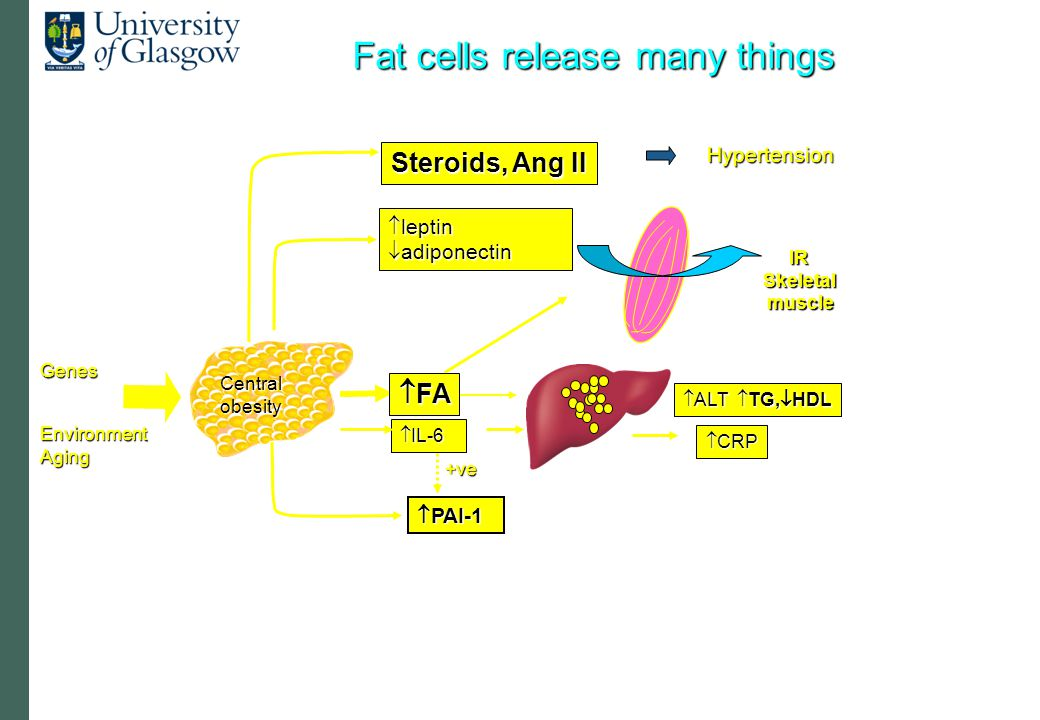  IL-6  CRP  ALT  TG,  HDL IRSkeletalmuscle Genes  FA  PAI-1 +ve  leptin  adiponectin EnvironmentAging Centralobesity Steroids, Ang II Hypertension Fat cells release many things