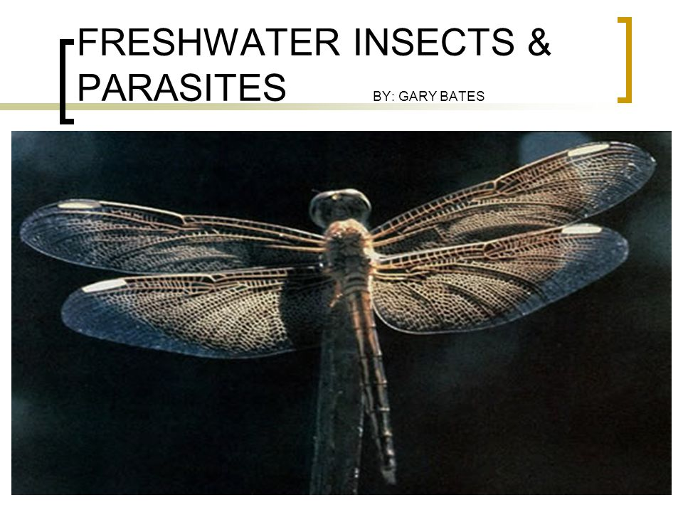 FRESHWATER INSECTS & PARASITES BY: GARY BATES