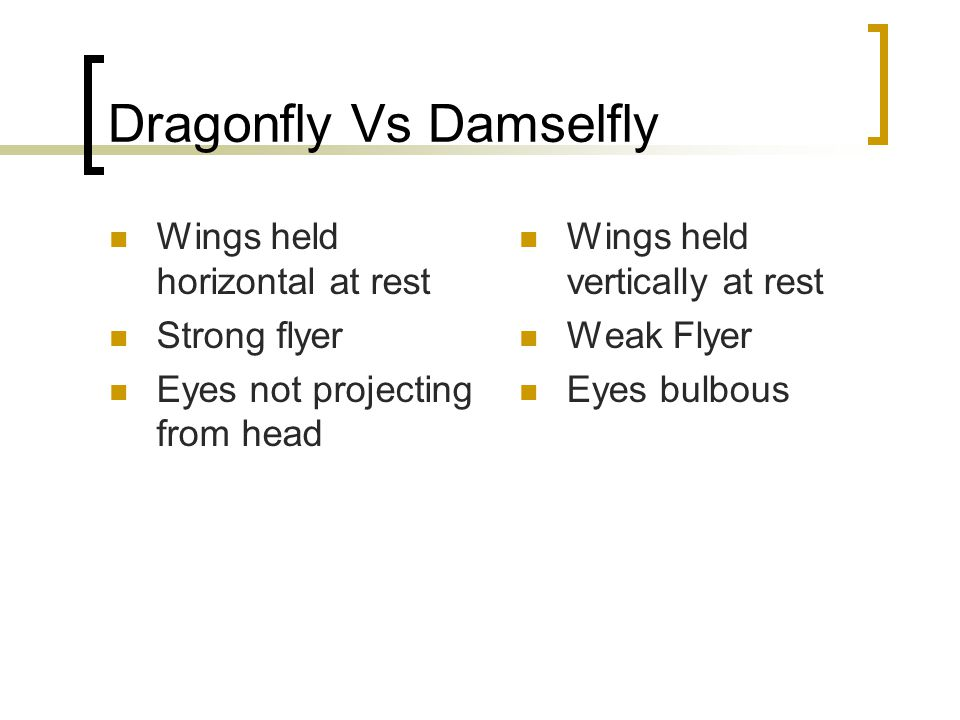 Dragonfly Vs Damselfly Wings held horizontal at rest Strong flyer Eyes not projecting from head Wings held vertically at rest Weak Flyer Eyes bulbous