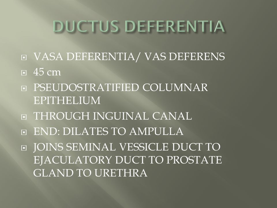  VASA DEFERENTIA/ VAS DEFERENS  45 cm  PSEUDOSTRATIFIED COLUMNAR EPITHELIUM  THROUGH INGUINAL CANAL  END: DILATES TO AMPULLA  JOINS SEMINAL VESS