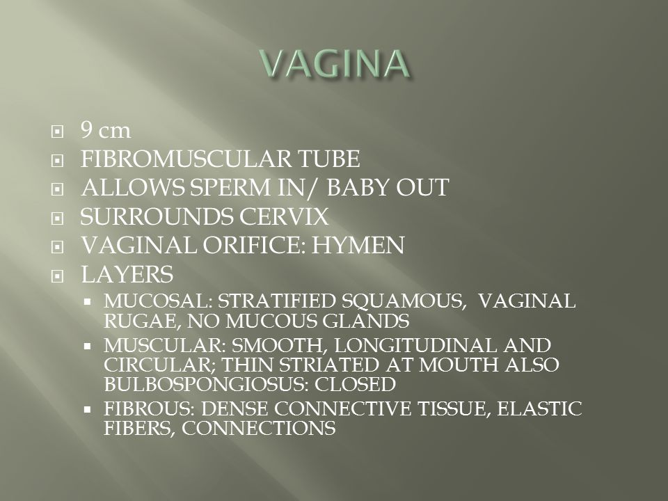  9 cm  FIBROMUSCULAR TUBE  ALLOWS SPERM IN/ BABY OUT  SURROUNDS CERVIX  VAGINAL ORIFICE: HYMEN  LAYERS  MUCOSAL: STRATIFIED SQUAMOUS, VAGINAL R