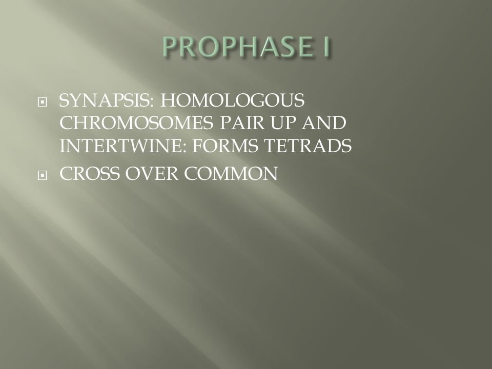  SYNAPSIS: HOMOLOGOUS CHROMOSOMES PAIR UP AND INTERTWINE: FORMS TETRADS  CROSS OVER COMMON