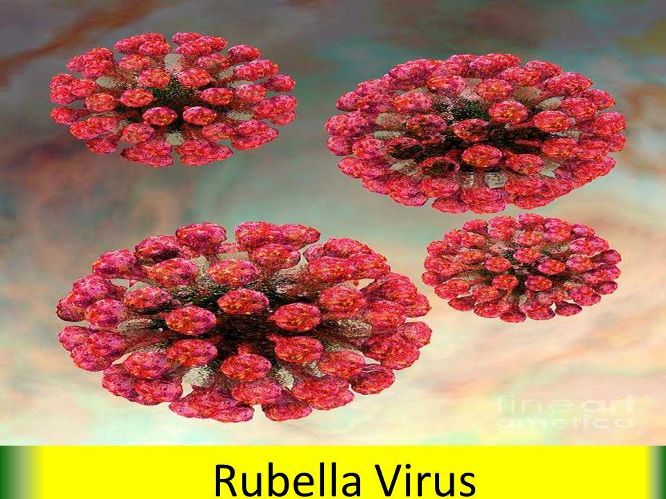 Rubella Virus