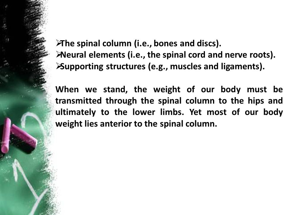  The spinal column (i.e., bones and discs).  Neural elements (i.e., the spinal cord and nerve roots).  Supporting structures (e.g., muscles and lig