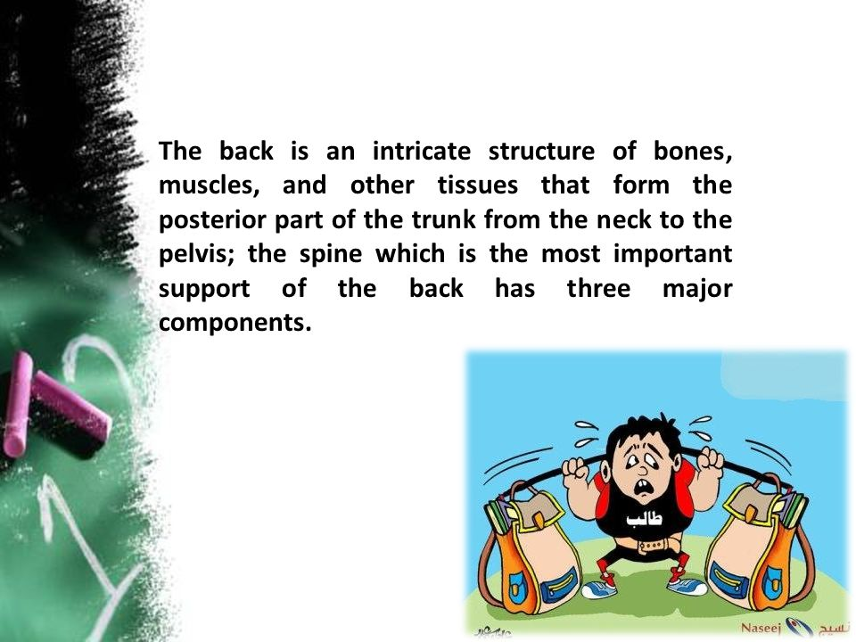 The back is an intricate structure of bones, muscles, and other tissues that form the posterior part of the trunk from the neck to the pelvis; the spi