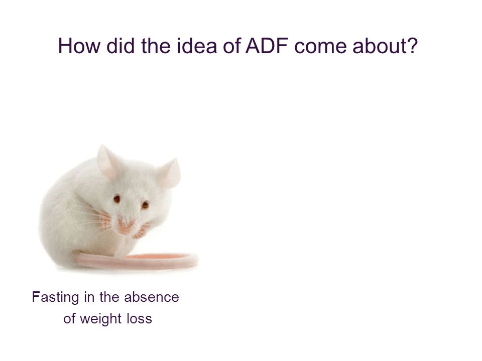 Fasting in the absence of weight loss How did the idea of ADF come about