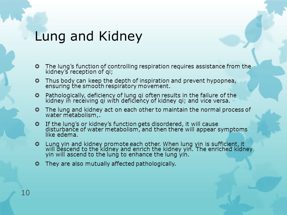 Lung and Kidney  The lung's function of controlling respiration requires assistance from the kidney's reception of qi;  Thus body can keep the depth of inspiration and prevent hypopnea, ensuring the smooth respiratory movement.
