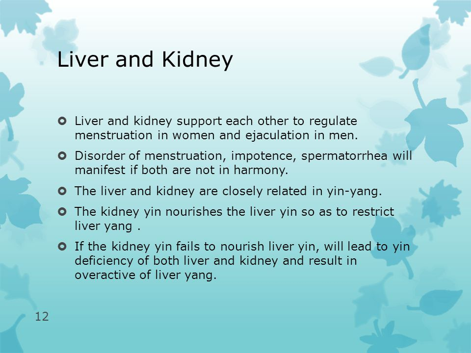Liver and Kidney  Liver and kidney support each other to regulate menstruation in women and ejaculation in men.