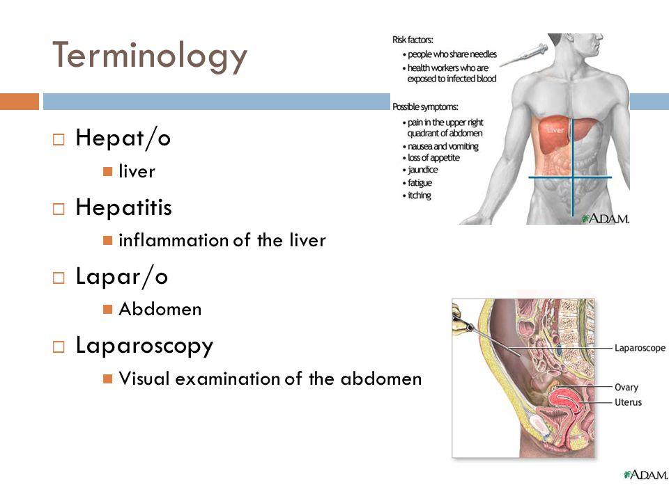Terminology  Hepat/o liver  Hepatitis inflammation of the liver  Lapar/o Abdomen  Laparoscopy Visual examination of the abdomen