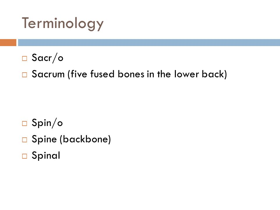 Terminology  Sacr/o  Sacrum (five fused bones in the lower back)  Spin/o  Spine (backbone)  Spinal