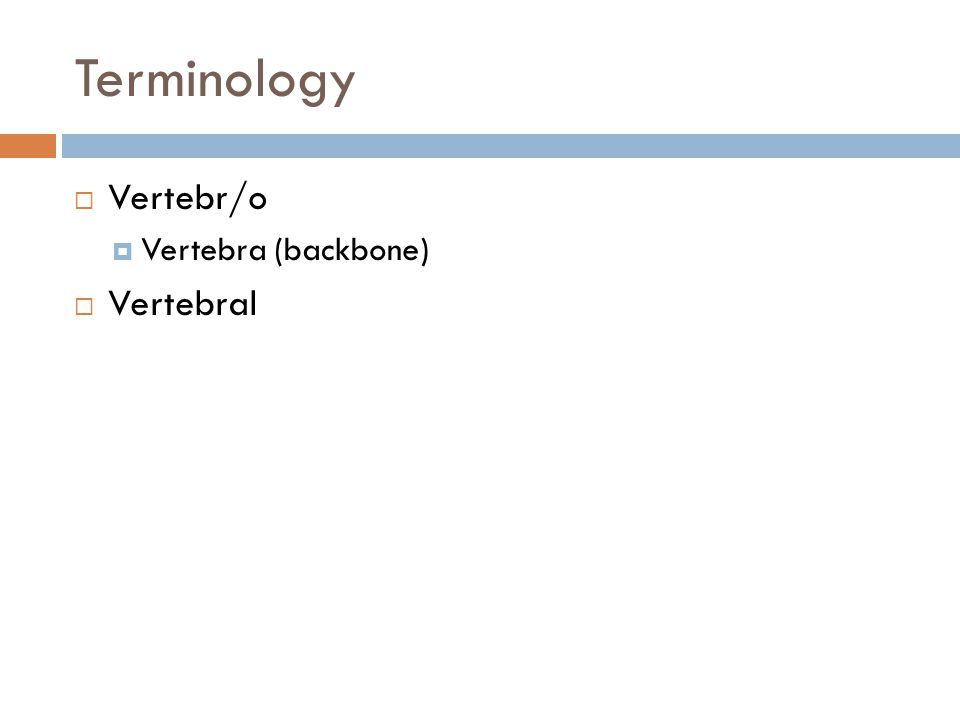 Terminology  Vertebr/o  Vertebra (backbone)  Vertebral