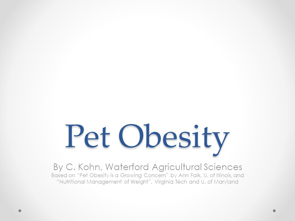Pet Obesity Pet obesity affects as many as 40% of dogs in the US o While pet obesity may seem like a minor problem, it can result in serious health implications for pets.