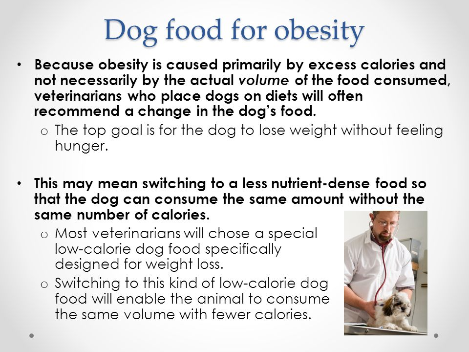 Dog food for obesity Because obesity is caused primarily by excess calories and not necessarily by the actual volume of the food consumed, veterinarians who place dogs on diets will often recommend a change in the dog's food.