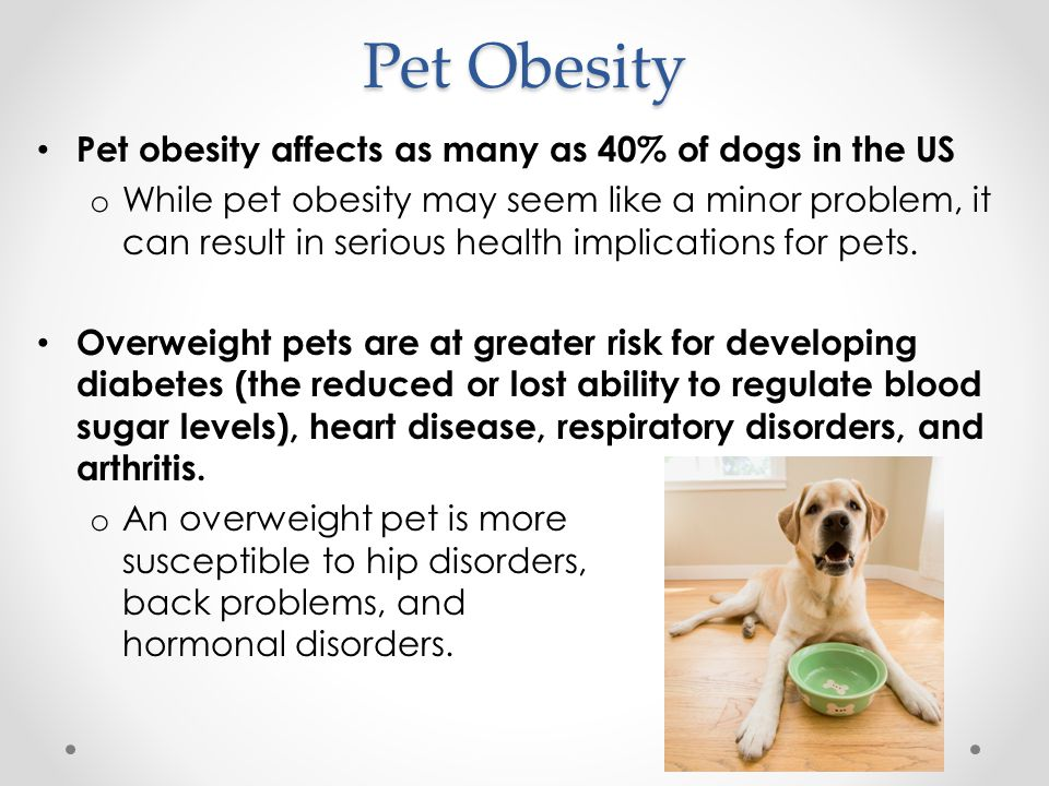 Treating Obesity So what do you do if your dog is obese or overweight.