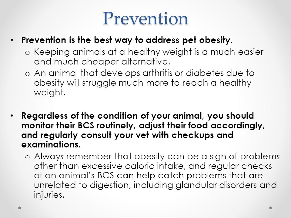 Prevention Prevention is the best way to address pet obesity.