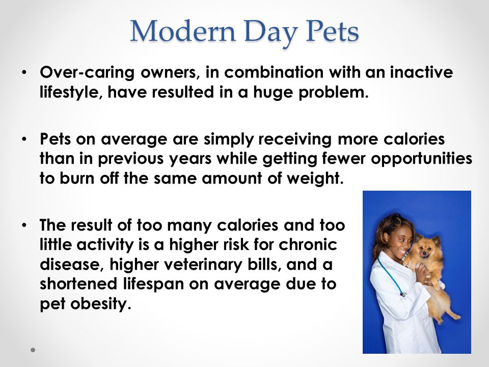 Low-calorie dog foods Simply reducing a pet's caloric intake without any special modifications or changes can put the animal at risk.