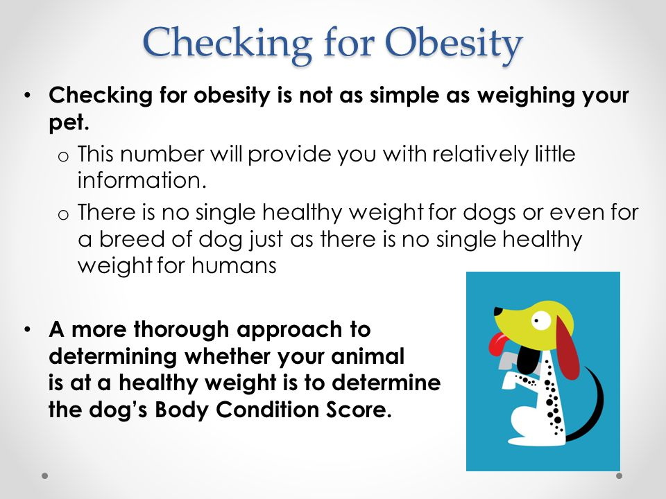 Checking for Obesity Checking for obesity is not as simple as weighing your pet.