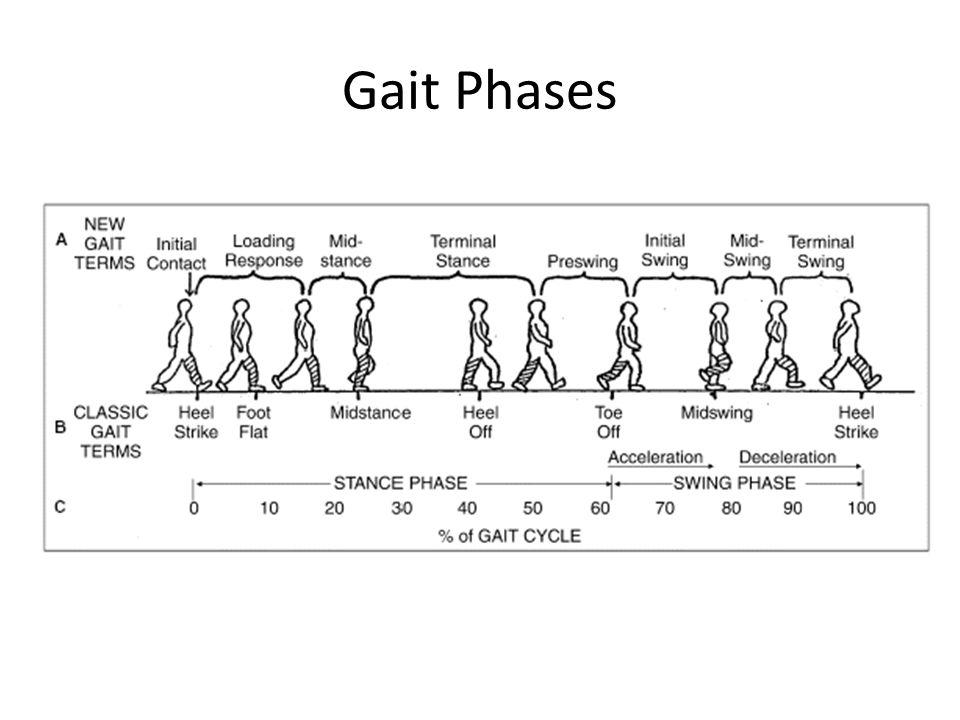Gait Phases