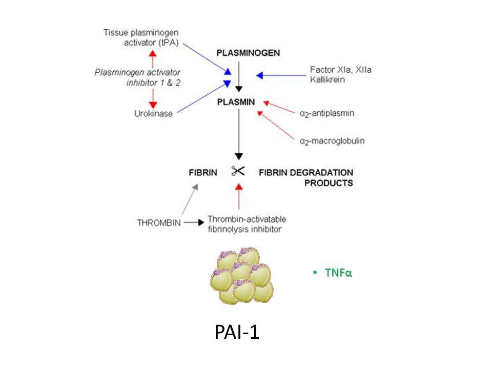 PAI-1 TNFα TNFα