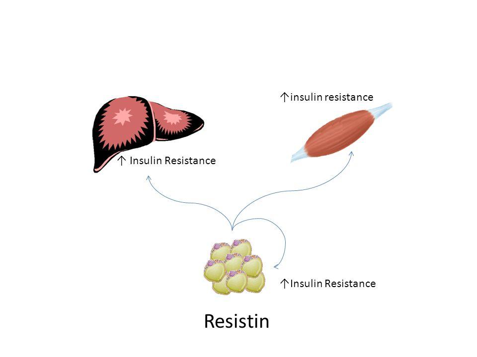 Resistin ↑insulin resistance ↑ Insulin Resistance