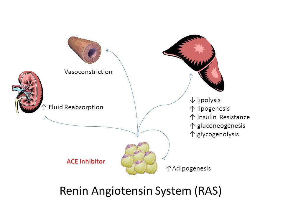 Renin Angiotensin System (RAS) ↑ Fluid Reabsorption ↑Adipogenesis ACE Inhibitor Vasoconstriction ↓ lipolysis ↑ lipogenesis ↑ Insulin Resistance ↑ gluconeogenesis ↑ glycogenolysis
