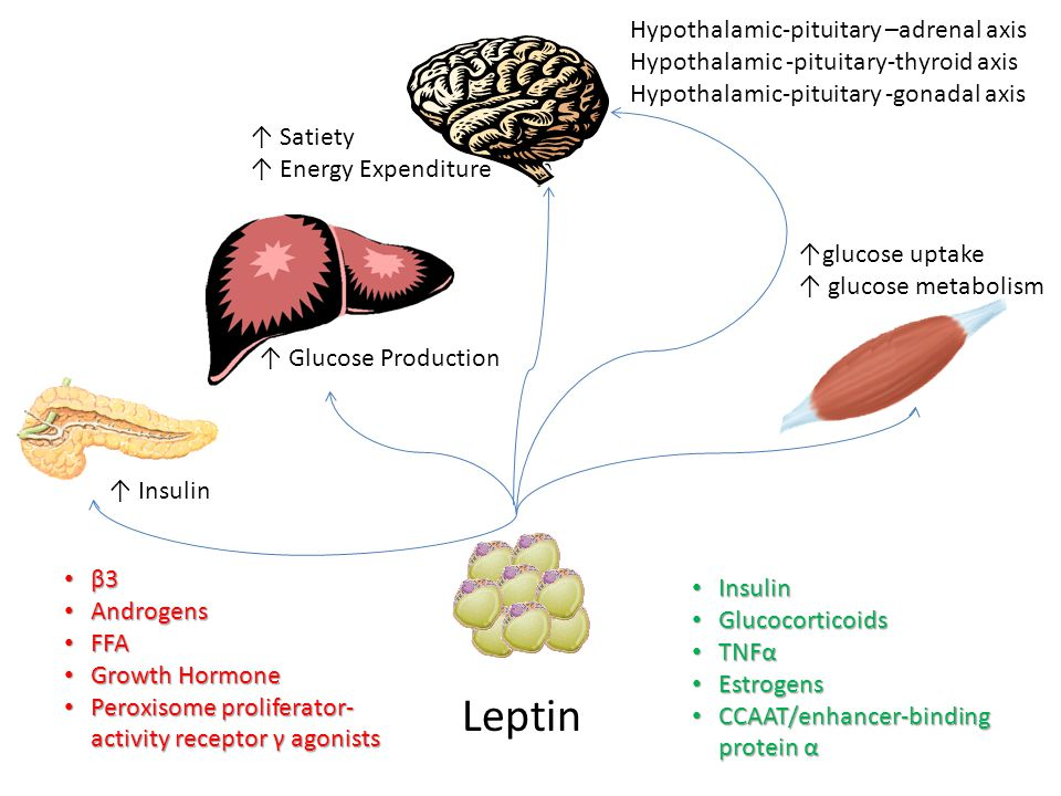 Leptin Insulin Insulin Glucocorticoids Glucocorticoids TNFα TNFα Estrogens Estrogens CCAAT/enhancer-binding protein α CCAAT/enhancer-binding protein α β3 β3 Androgens Androgens FFA FFA Growth Hormone Growth Hormone Peroxisome proliferator- activity receptor γ agonists Peroxisome proliferator- activity receptor γ agonists ↑ Satiety ↑ Energy Expenditure ↑glucose uptake ↑ glucose metabolism ↑ Insulin ↑ Glucose Production Hypothalamic-pituitary –adrenal axis Hypothalamic -pituitary-thyroid axis Hypothalamic-pituitary -gonadal axis