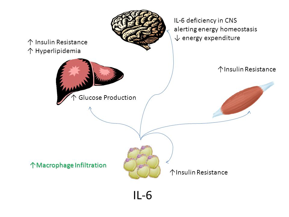 IL-6 ↑ Insulin Resistance ↑ Hyperlipidemia ↑Insulin Resistance ↑ Glucose Production ↑Insulin Resistance IL-6 deficiency in CNS alerting energy homeostasis ↓ energy expenditure ↑Macrophage Infiltration
