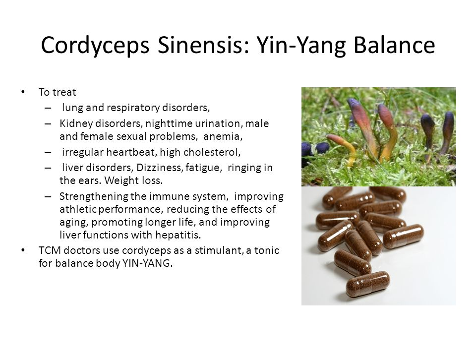 Cordyceps Sinensis: Yin-Yang Balance To treat – lung and respiratory disorders, – Kidney disorders, nighttime urination, male and female sexual proble