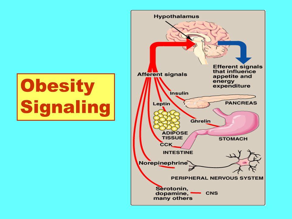 Obesity Signaling