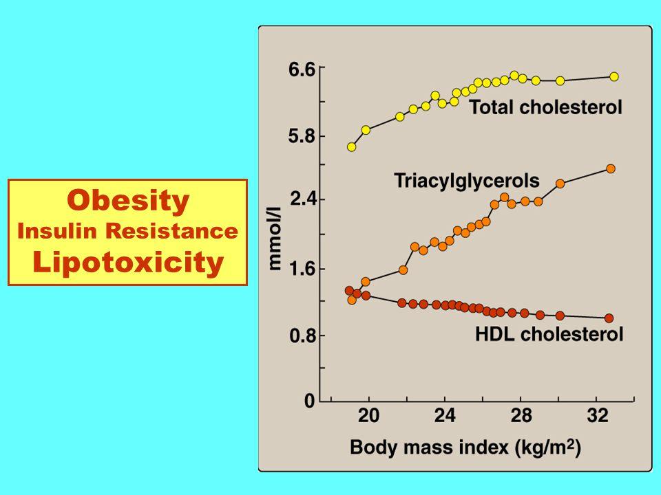 Obesity Insulin Resistance Lipotoxicity