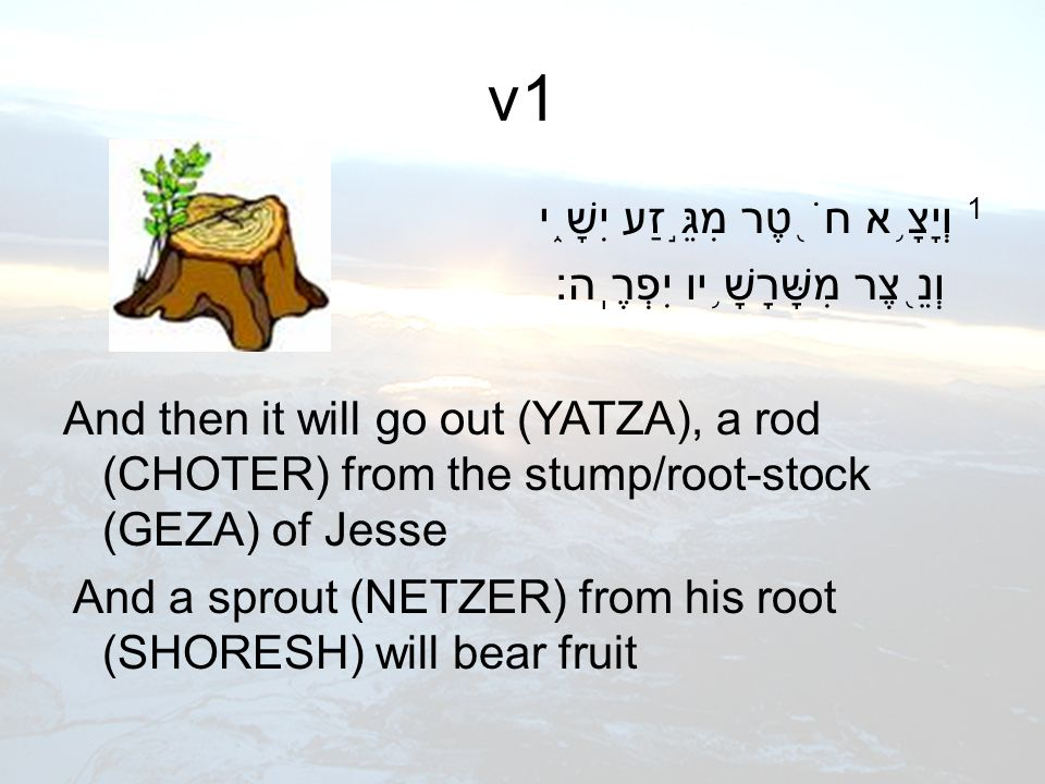 v1 1 וְיָצָ ֥ א חֹ ֖ טֶר מִגֵּ ֣ זַע יִשָׁ ֑ י וְנֵ ֖ צֶר מִשָּׁרָשָׁ ֥ יו יִפְרֶֽה׃ And then it will go out (YATZA), a rod (CHOTER) from the stump/root-stock (GEZA) of Jesse And a sprout (NETZER) from his root (SHORESH) will bear fruit