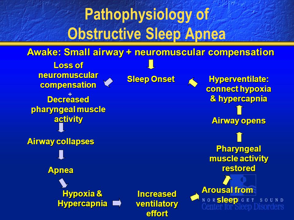 Pathophysiology of Obstructive Sleep Apnea Awake: Small airway + neuromuscular compensation Loss of neuromuscular compensation Sleep Onset Hyperventilate: connect hypoxia & hypercapnia Decreased pharyngeal muscle activity Airway opens Airway collapses Pharyngeal muscle activity restored Apnea Arousal from sleep Hypoxia & Hypercapnia Increased ventilatory effort +