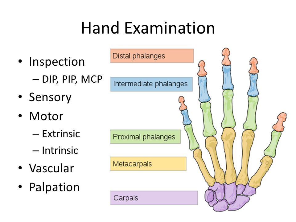 Hand Examination Inspection – DIP, PIP, MCP Sensory Motor – Extrinsic – Intrinsic Vascular Palpation