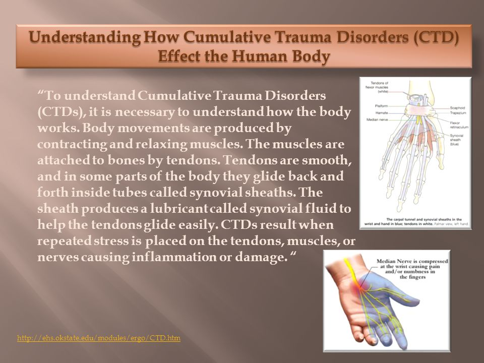 To understand Cumulative Trauma Disorders (CTDs), it is necessary to understand how the body works.