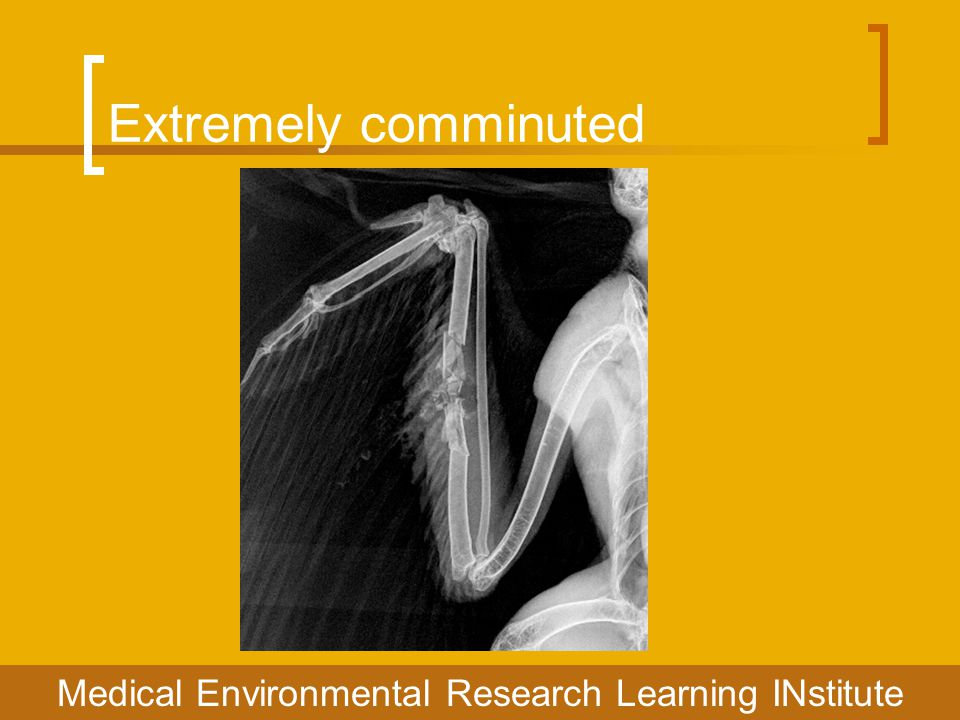 Extremely comminuted Medical Environmental Research Learning INstitute