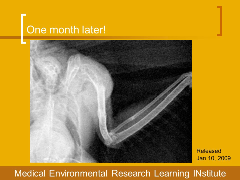 One month later! Released Jan 10, 2009 Medical Environmental Research Learning INstitute