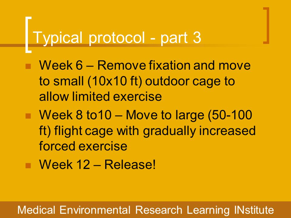 Typical protocol - part 3 Week 6 – Remove fixation and move to small (10x10 ft) outdoor cage to allow limited exercise Week 8 to10 – Move to large (50