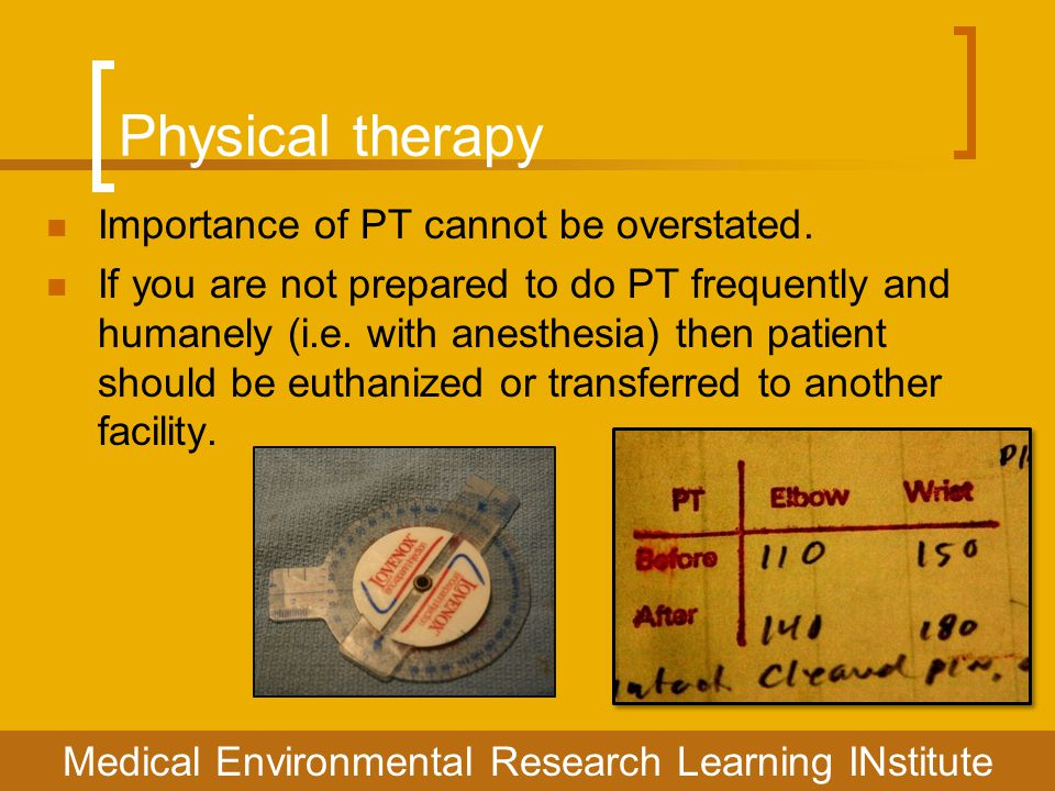 Physical therapy Importance of PT cannot be overstated. If you are not prepared to do PT frequently and humanely (i.e. with anesthesia) then patient s