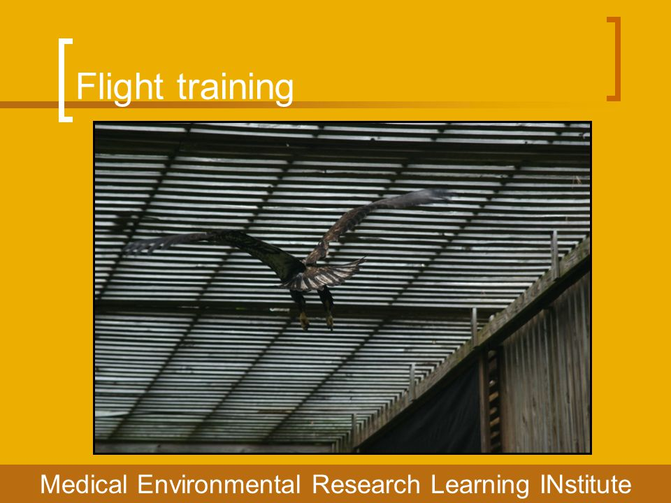 Flight training Medical Environmental Research Learning INstitute