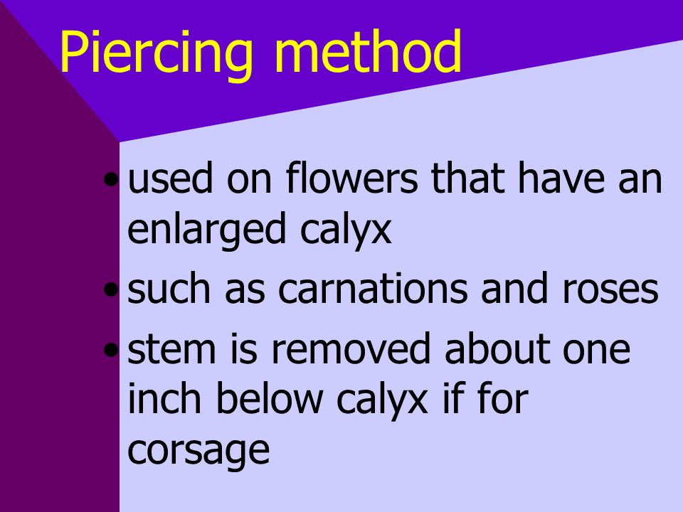 Piercing method used on flowers that have an enlarged calyx such as carnations and roses stem is removed about one inch below calyx if for corsage