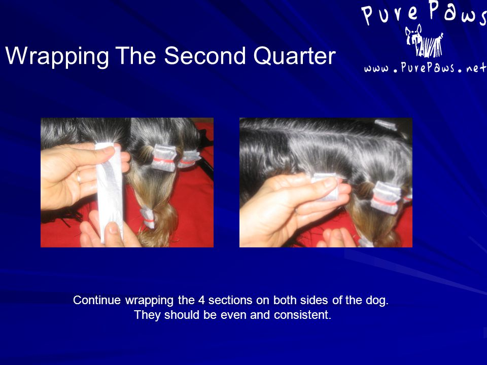 Continue wrapping the 4 sections on both sides of the dog. They should be even and consistent. Wrapping The Second Quarter