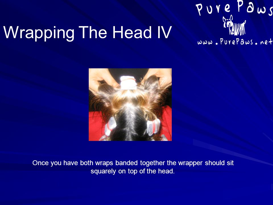 Once you have both wraps banded together the wrapper should sit squarely on top of the head. Wrapping The Head IV