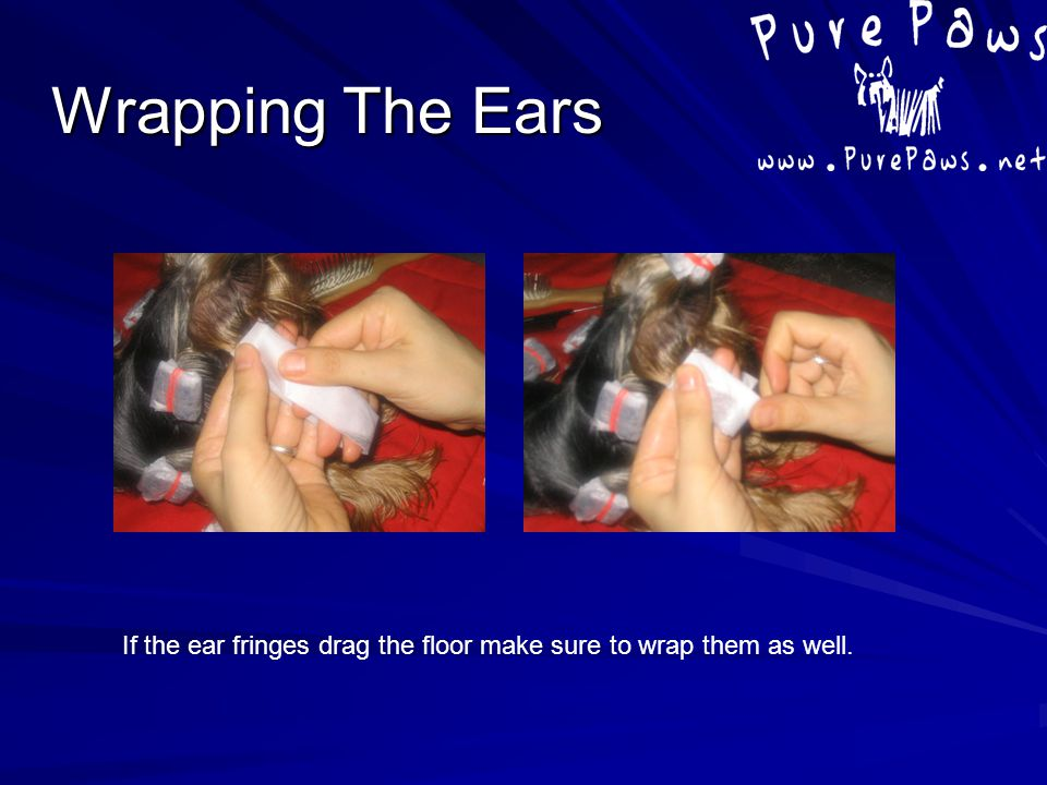 Wrapping The Ears If the ear fringes drag the floor make sure to wrap them as well.