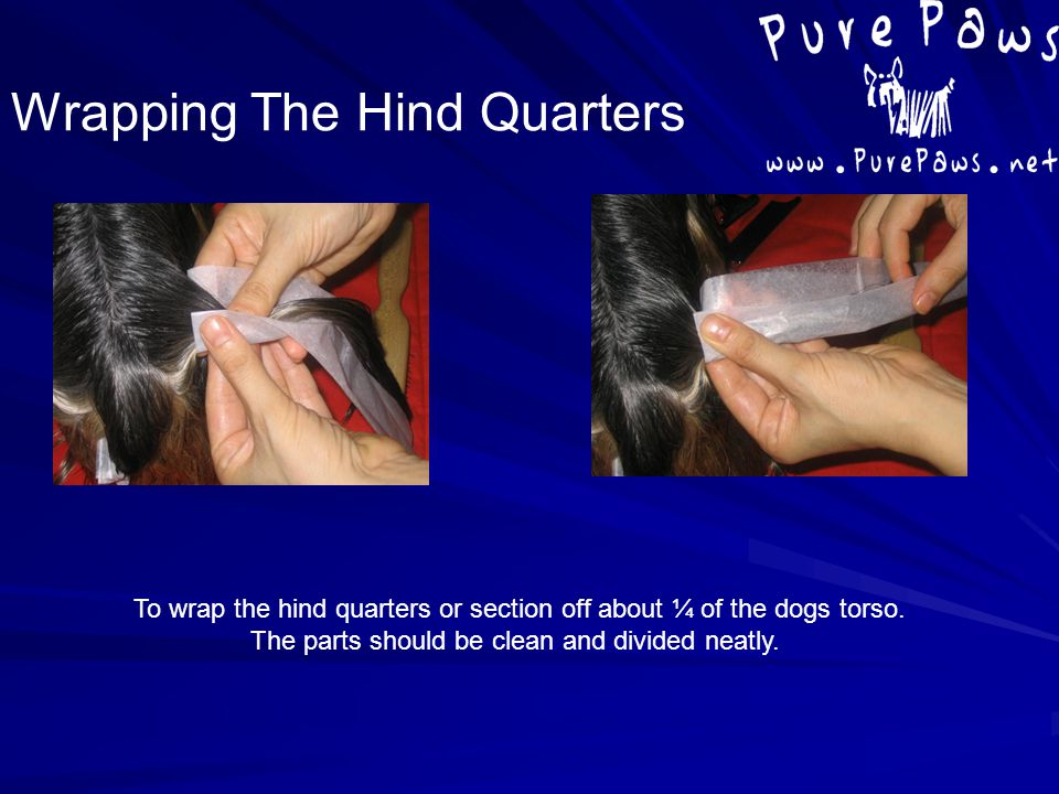 To wrap the hind quarters or section off about ¼ of the dogs torso. The parts should be clean and divided neatly. Wrapping The Hind Quarters