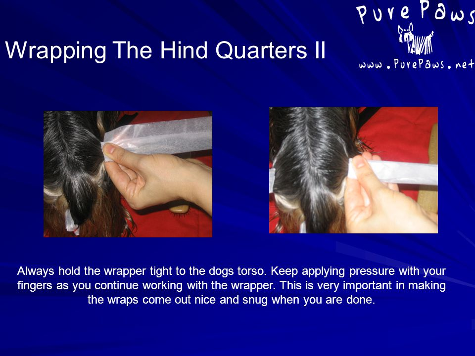 Always hold the wrapper tight to the dogs torso. Keep applying pressure with your fingers as you continue working with the wrapper. This is very impor