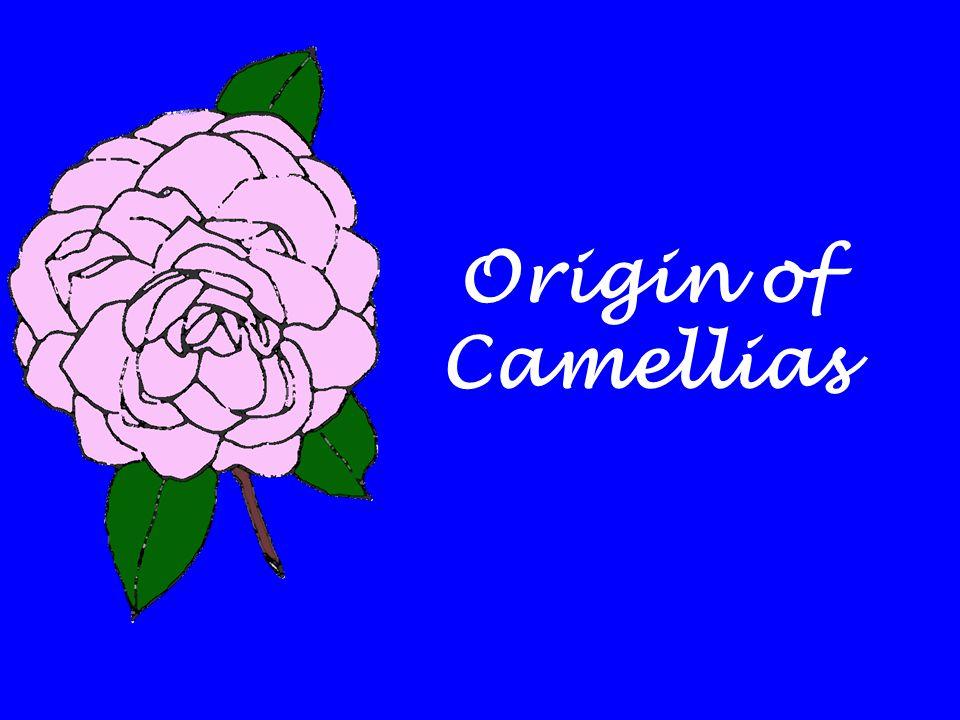 Origin of Camellias