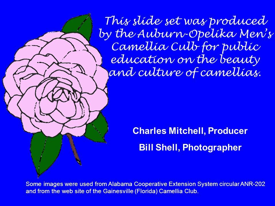 This slide set was produced by the Auburn-Opelika Men's Camellia Culb for public education on the beauty and culture of camellias. Charles Mitchell, P