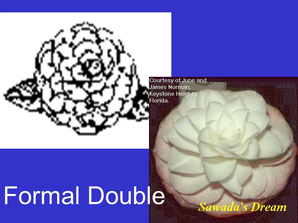 Formal Double