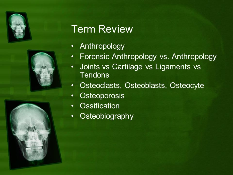 Term Review Anthropology Forensic Anthropology vs.